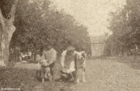 Close-up of dog and lamb with people in early Kodak snapshot