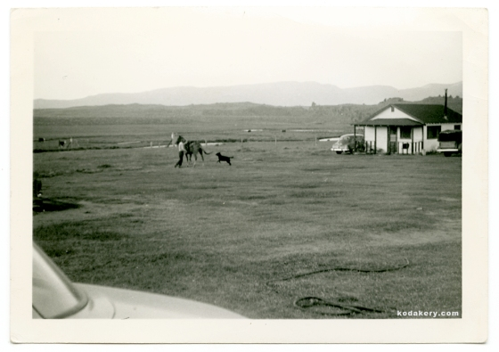 Vintage 1940s photo of a horse, dog and farmhouse